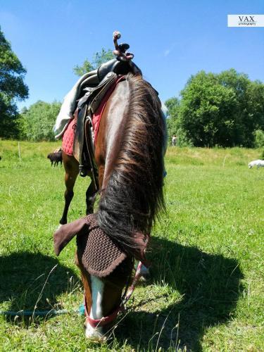 horse bratislava
